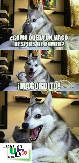 Humor, chiste, animales