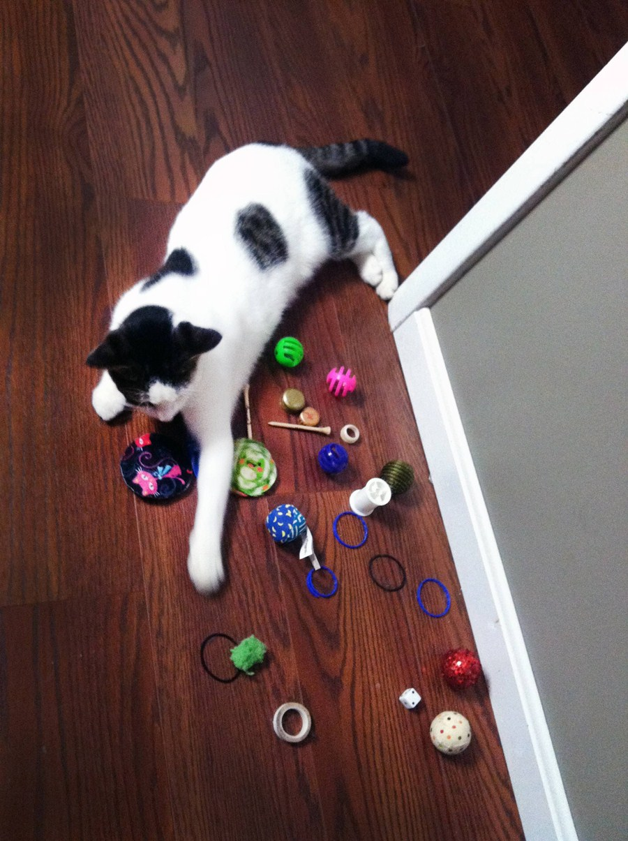 funny cats, cute cat pictures, cat with toys