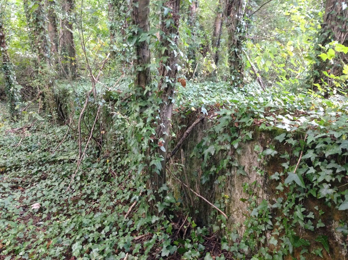 Remains of an old platform, Meon Valley Railway, Hampshire
