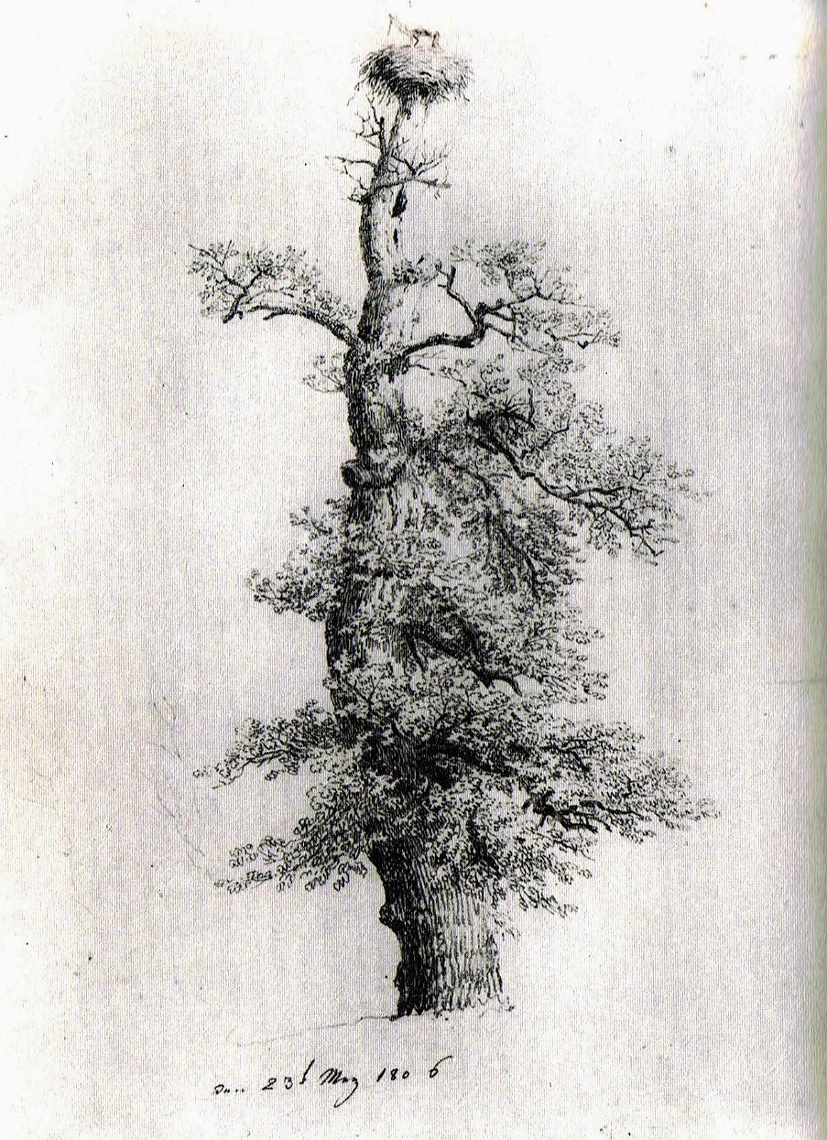 Caspar David Friedrich 240 Caspar David Friedrichs Familienbäume