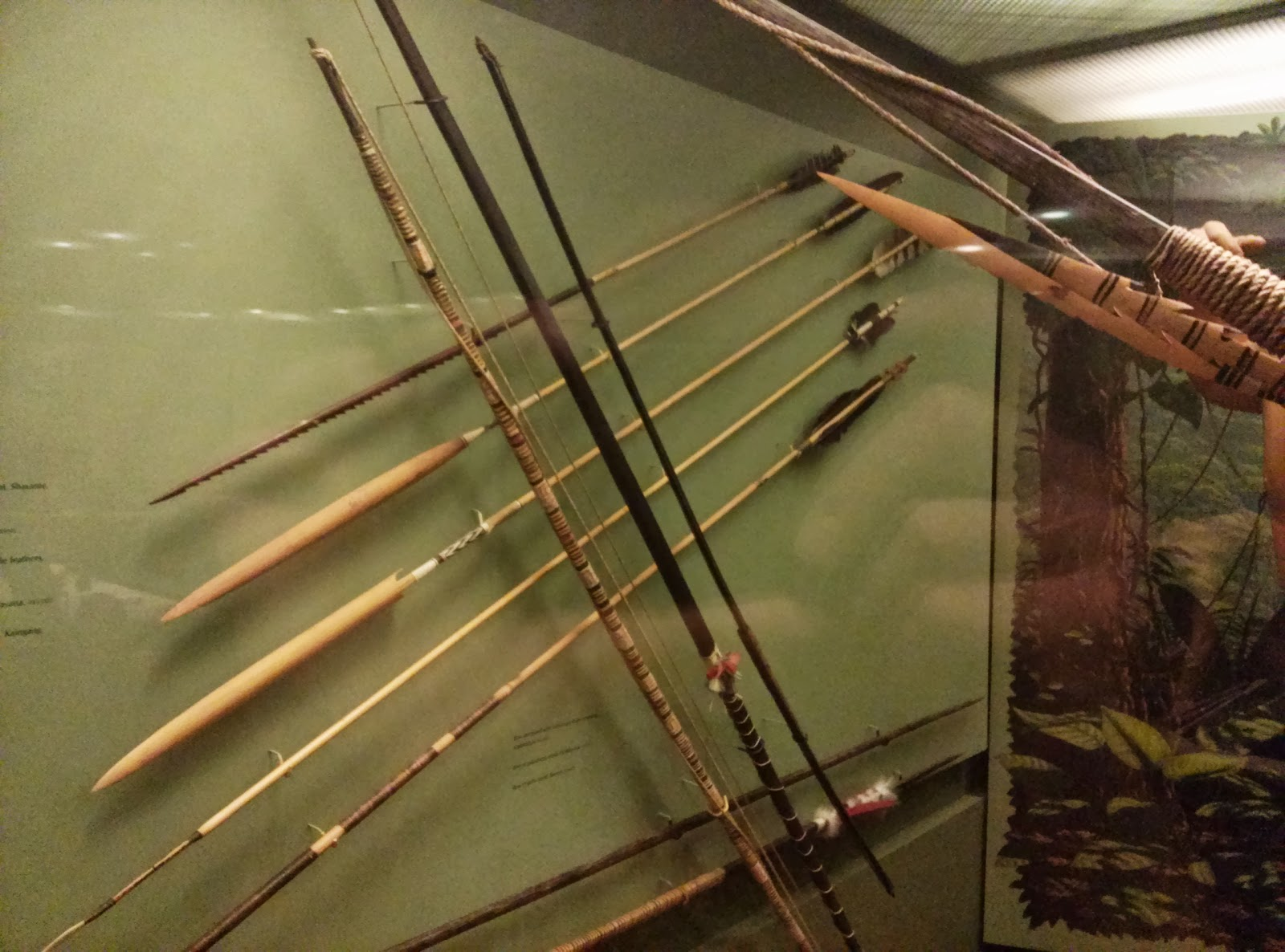 bow and archery displays from the american natural history museum