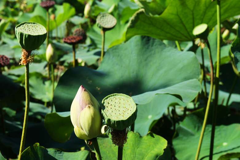 Ladylikes that lotus love that lotus love mightylinksfo