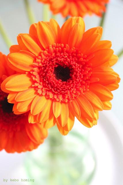 Gerbera Blumen flowers in orange bei kebo homing, dem Südtiroler Food- und Lifestyleblog, Fotografie, Styling und die Liebe zu den kleinen Dingen des Lebens