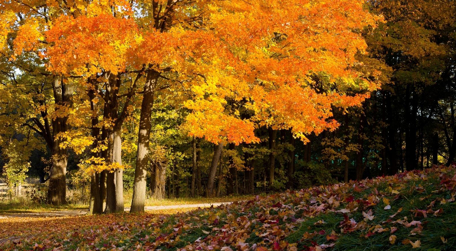 Autumn Beautiful Forest wallpaper