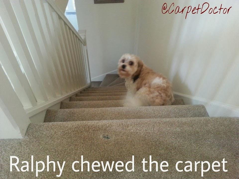 Carpet & Rug Repair Pet Damage.: Carpet & Rug Repair Service for Pet Damage at Home.