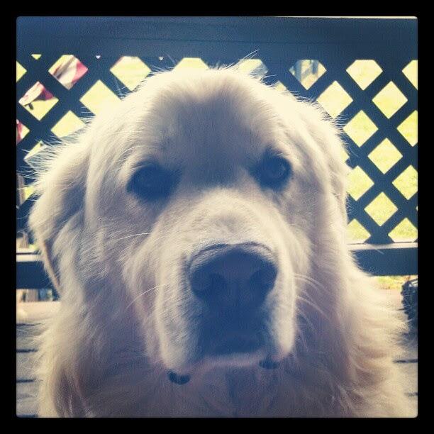 Giant Dawg Says Happy Derby Day!