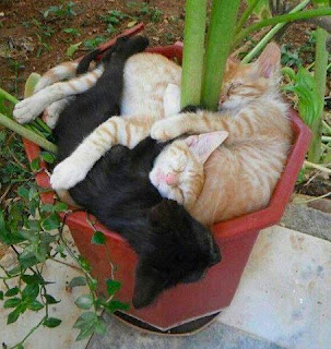 Container gardening you're doing it wrong