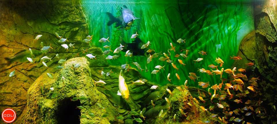 Khu nghĩ dưỡng cao cấp Phú Quốc Vinpearl Resort 15