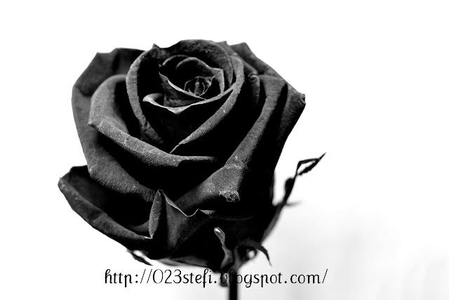 rosa+negra+(nombre).jpg