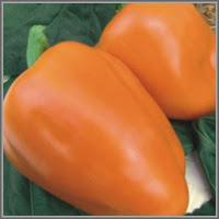 Сладкий перец сорт «Атомор»