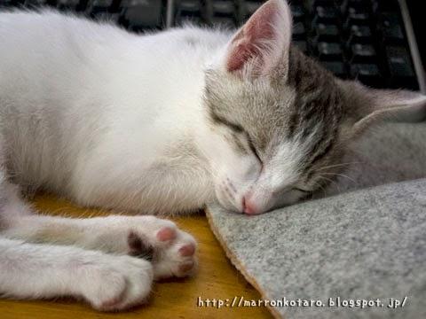 キーボードの前で眠る猫