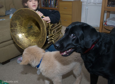 "Natalie is sitting on the floor about to blow her tuba. Black Lab ""Rosie"" is looking back at the camera with the white of her left eye showing. The puppy is in front of her looking away from the camera and at the tuba."