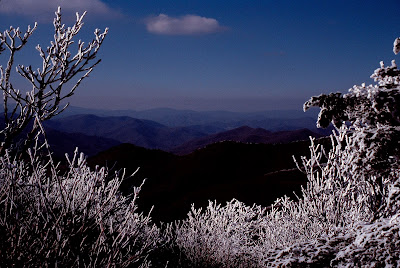 Rime ice on trees in the WNC mountains