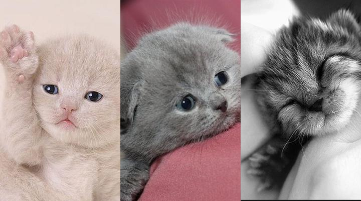 Samsung Samsung Star Nxt Wallpapers 3 In 1 Sets Puppys And Kittens