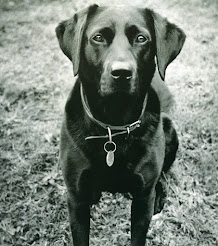 Sweetest Black Lab
