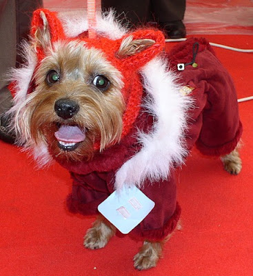 Cool Pet Costumes