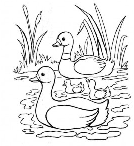Mewarnai Gambar Binatang Bebek Dengan Bagus Belajar Mewarnai