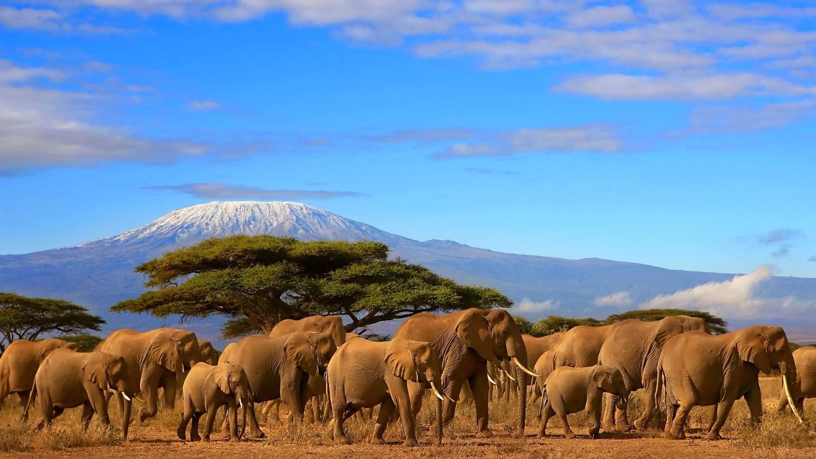 Hotels, Safari Lodges, marketing,Tanzania tours,Travel ...