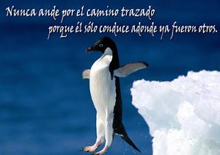 Pingüino y frase