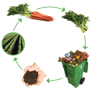 Cara Membuat Pupuk Kompos Dari Sampah Organik di sektar kita