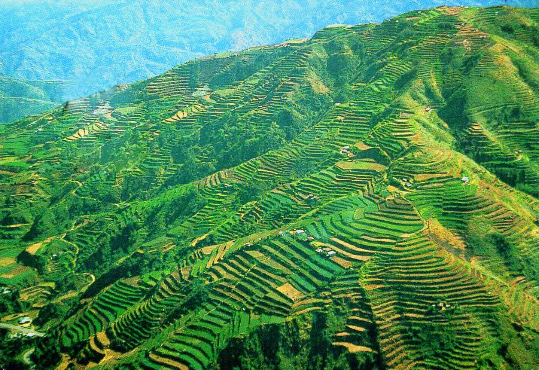 Scenic Beauty of Banawe Rice Terraces