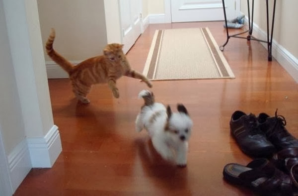 Funny animals of the week - 6 December 2013 (35 pics), cat chasing dog
