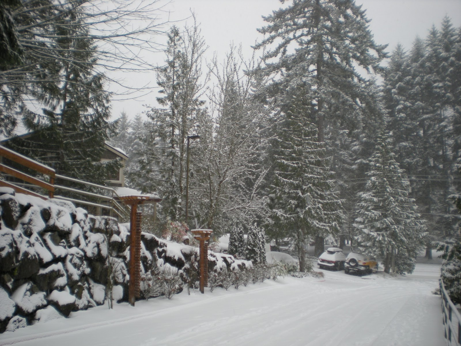 More Snow This Winter In Seattle Than New York And Boston - Weather issaquah wa hourly