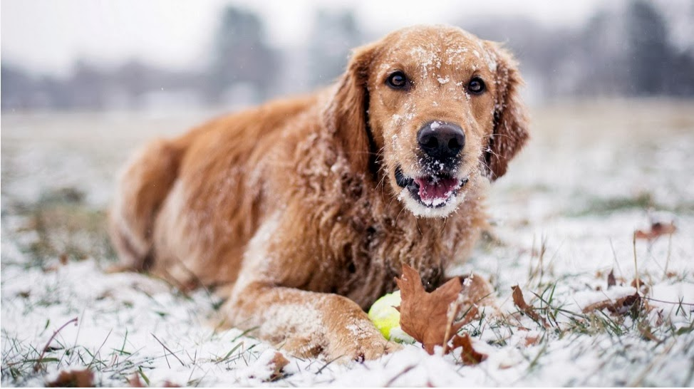 Dog in winter scene