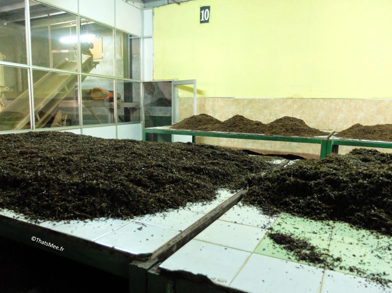 fabrique machines-outils usine de thé noir BOPF Sri-Lanka thé noir