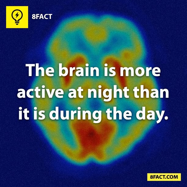 The brain is more active at night than it is during the day.