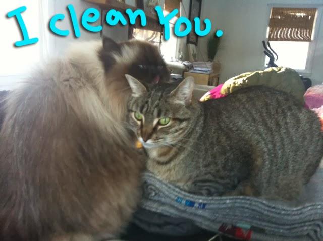 Goma_Clean_Kuma_02