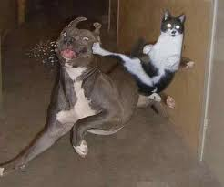 CAT ATACK