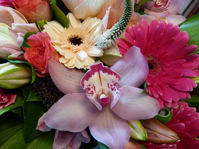 Les pins noirs un beau bouquet for Les amaryllis fleurs
