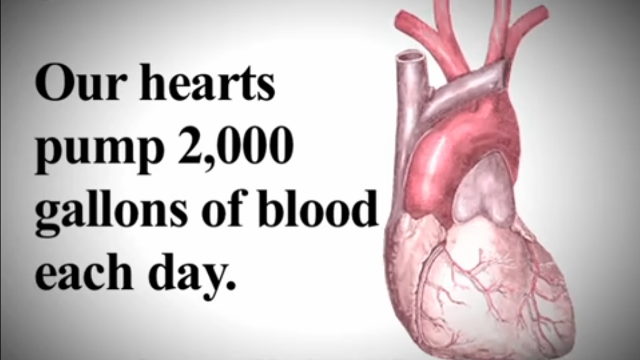 how much blood heart pumping daily