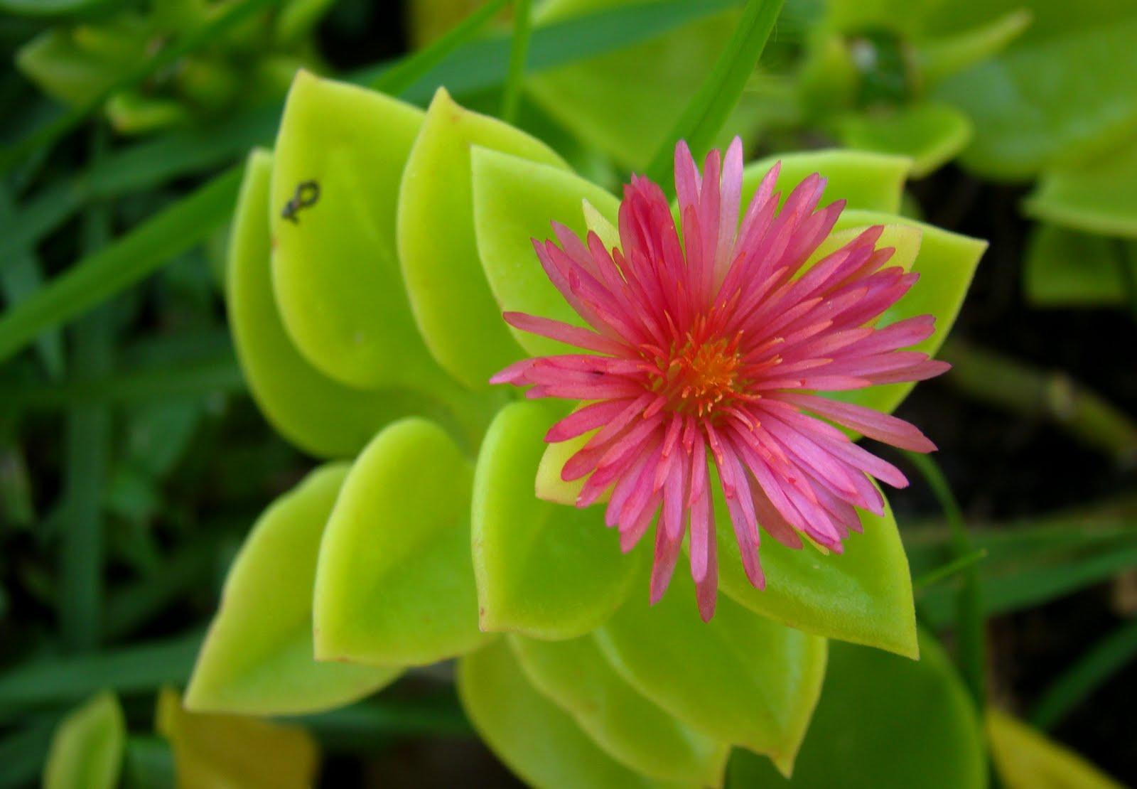 flores de jardim para todo o ano ano todo, o que é bastante atrativo