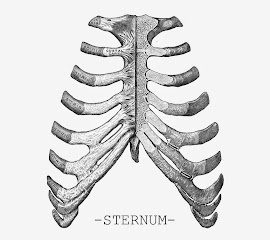 STERNUM necklaces