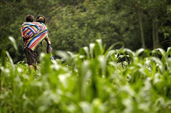 Medio ambiente ministerio de agricultura ganaderia y for Ministerio de ganaderia