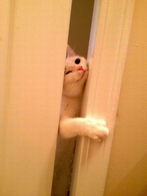 funny cat pictures, let me in