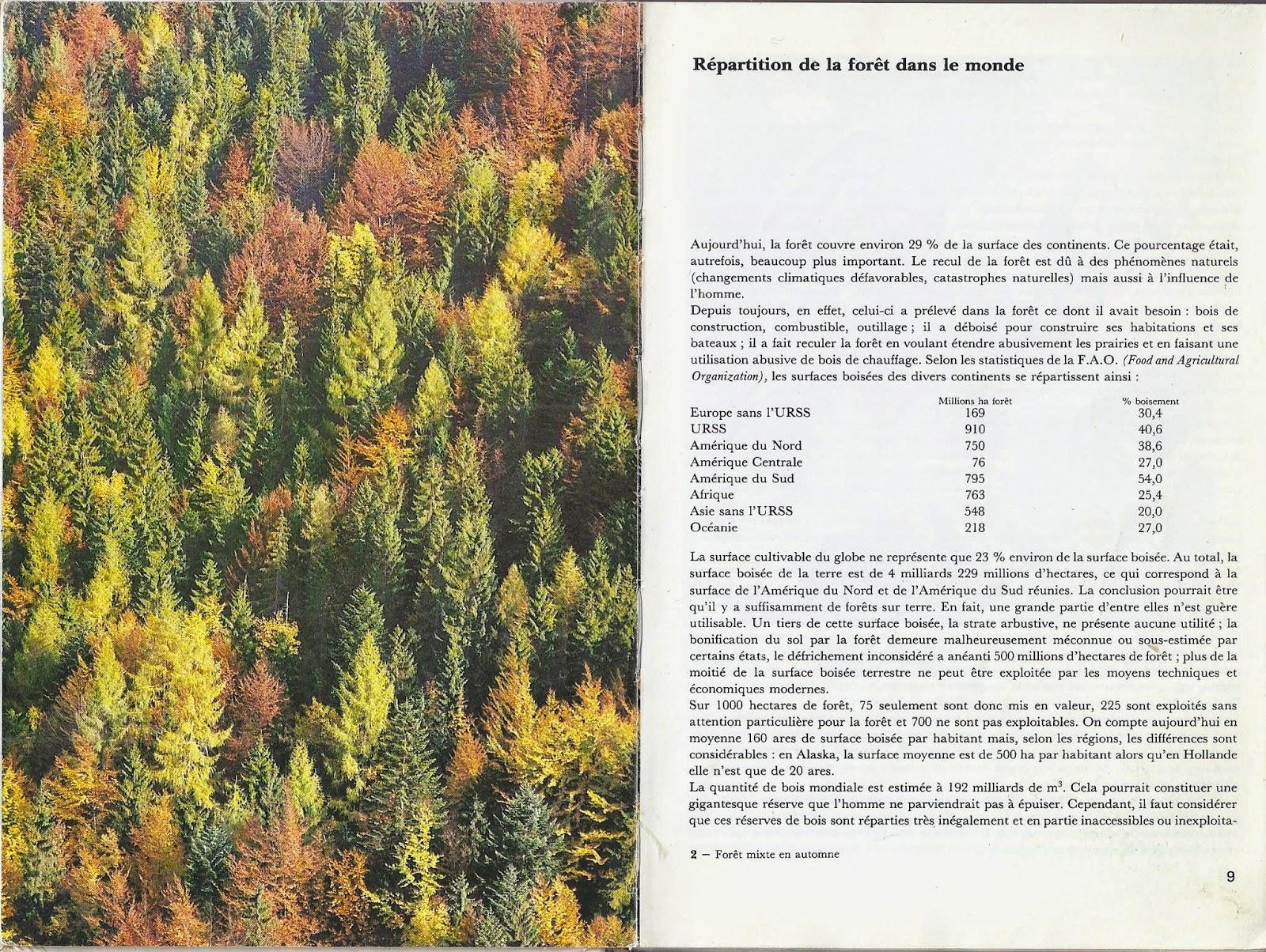 La forêt, communauté de vie
