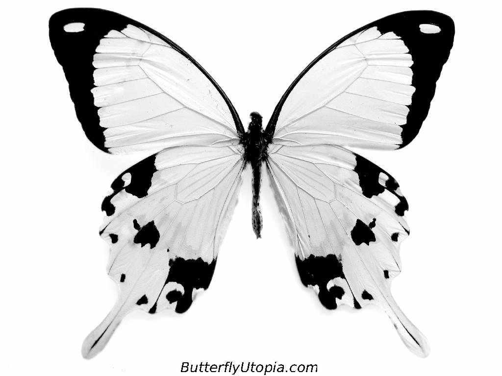 http://3.bp.blogspot.com/-vKK5Js9umkQ/T92-uJbZYxI/AAAAAAAAAFc/v2nd5mWOGoo/s1600/5-butterfly_coloring_page.jpg