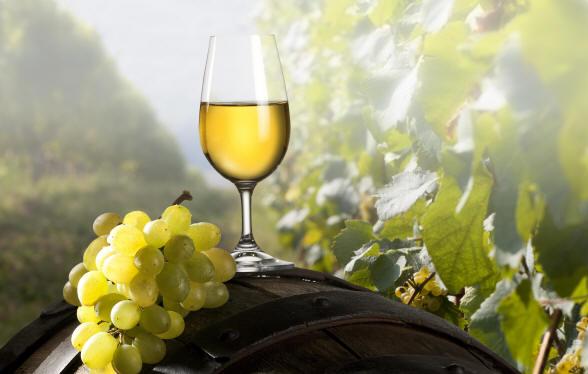 Виды винограда белого вина франция