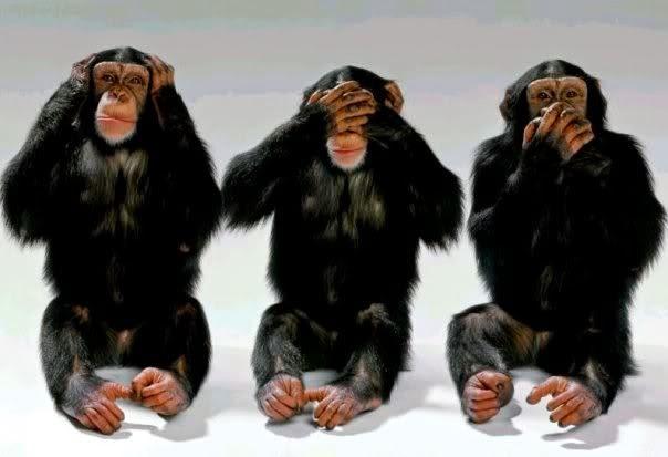 Ilmuwan Sukses Terjemahkan Bahasa Tubuh Simpanse