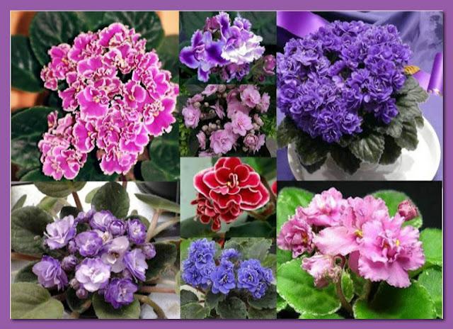 violeta-belanaselfie-a