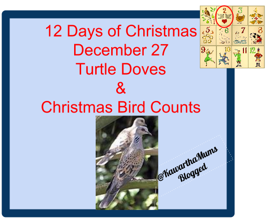 image 12 Days of Christmas - December 27 Turtle Doves plus Christmas Bird Counts