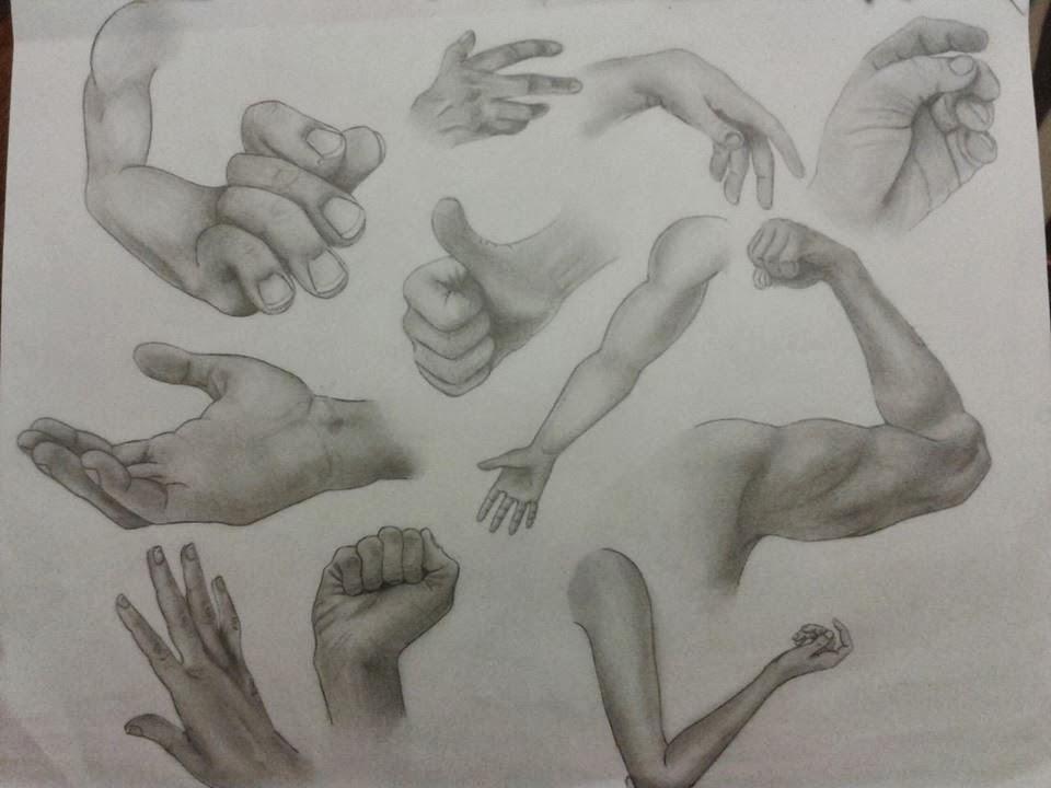 Danika sincennes dessin d 39 anatomie tude de la main et du bras - Dessin de la main ...