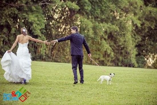 Cachorros em festa de casamento