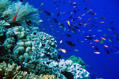Terumbu Karang di Dunia Terancam Rusak www.guntara.com