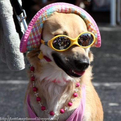 A dog in a pink clothes