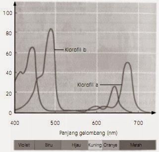 Perbedaan Reaksi Terang dan Reaksi Gelap