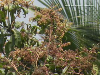 The-Mango-Tree-Week3-update